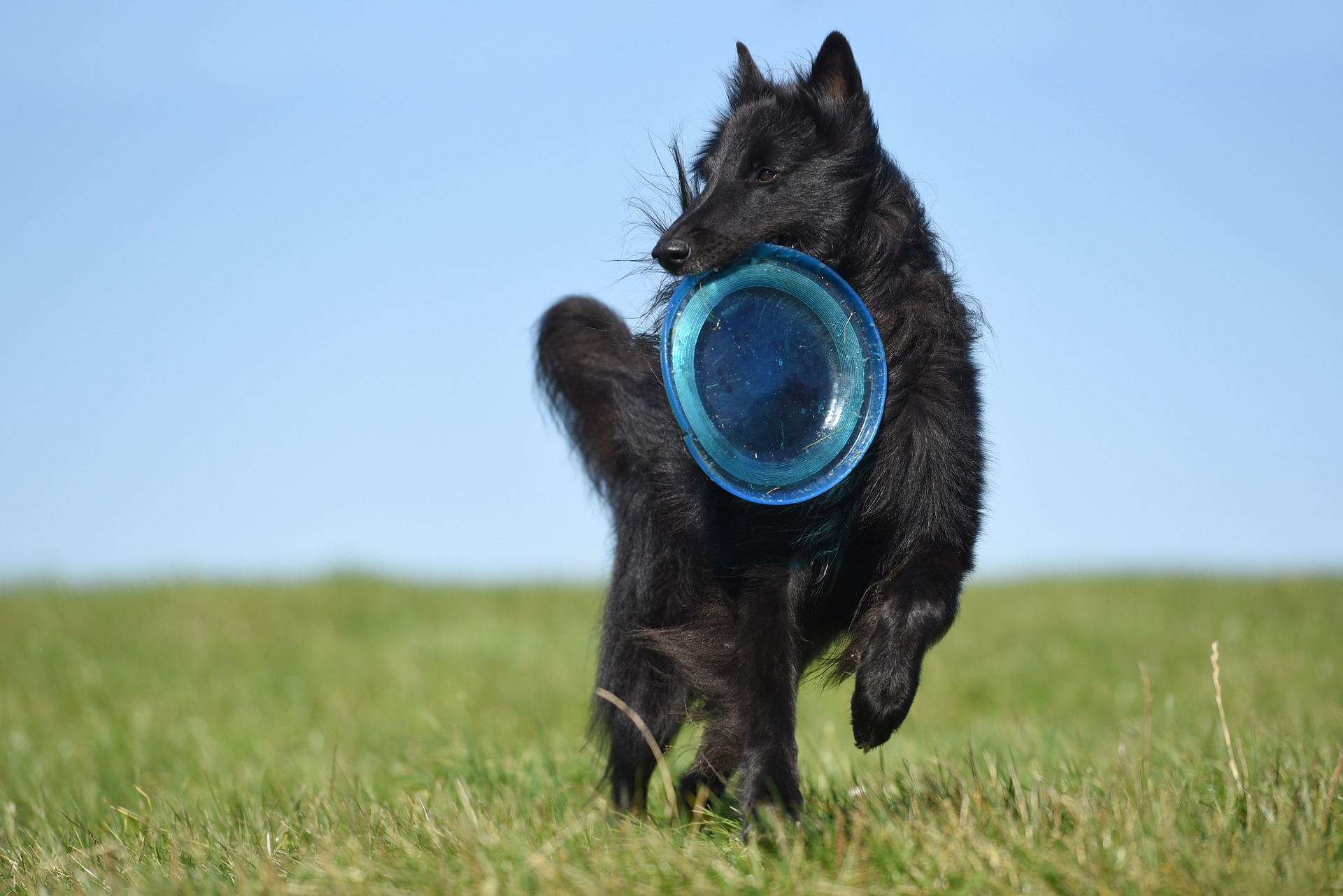 Actieve Hond